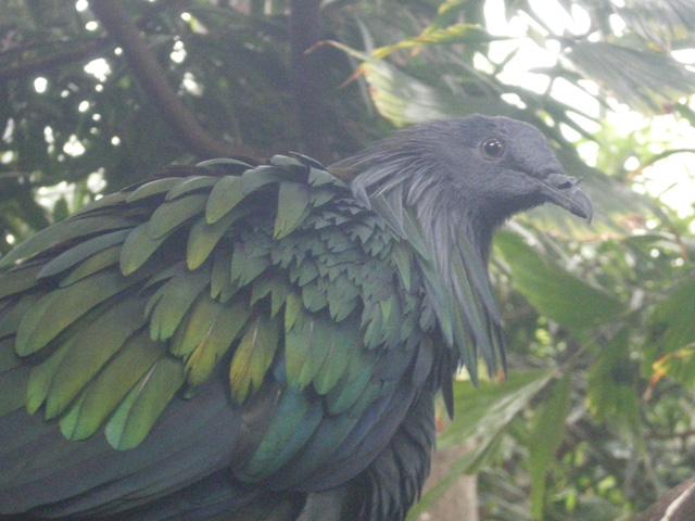 Rainbow_bird3