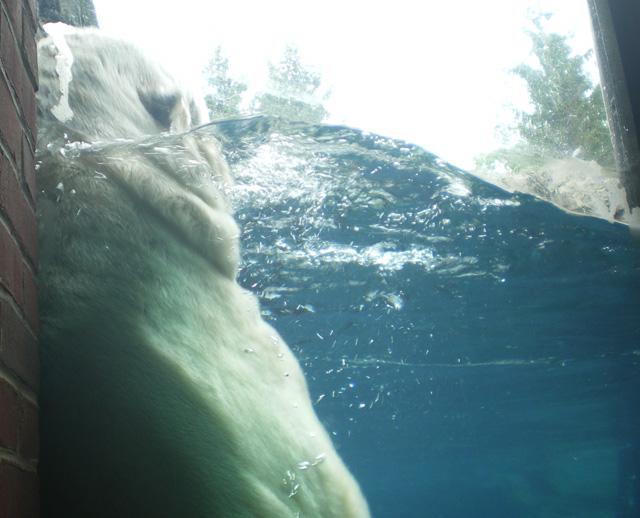 Bear_back_rub